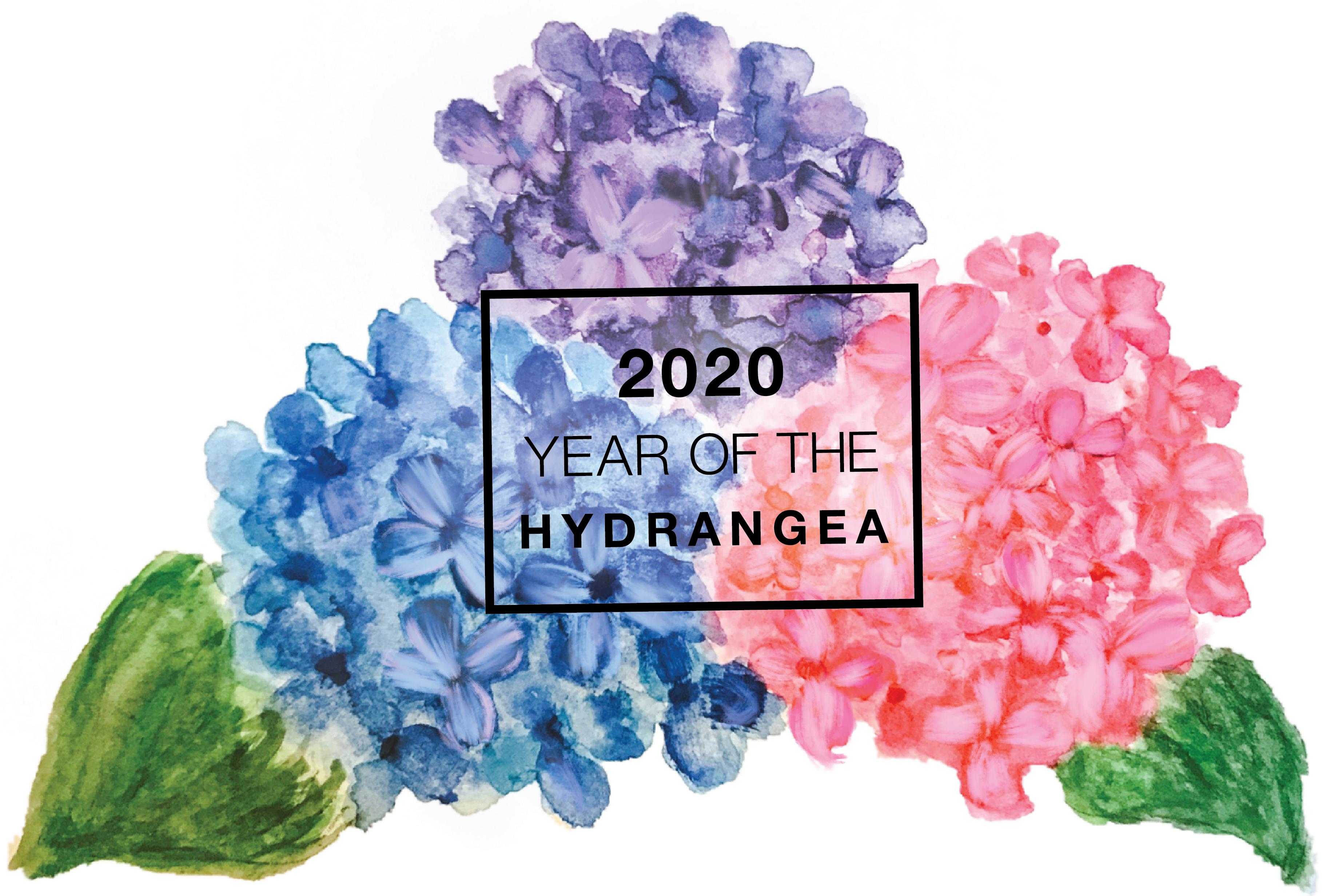 Year_of_the_Hydrangea_2.png